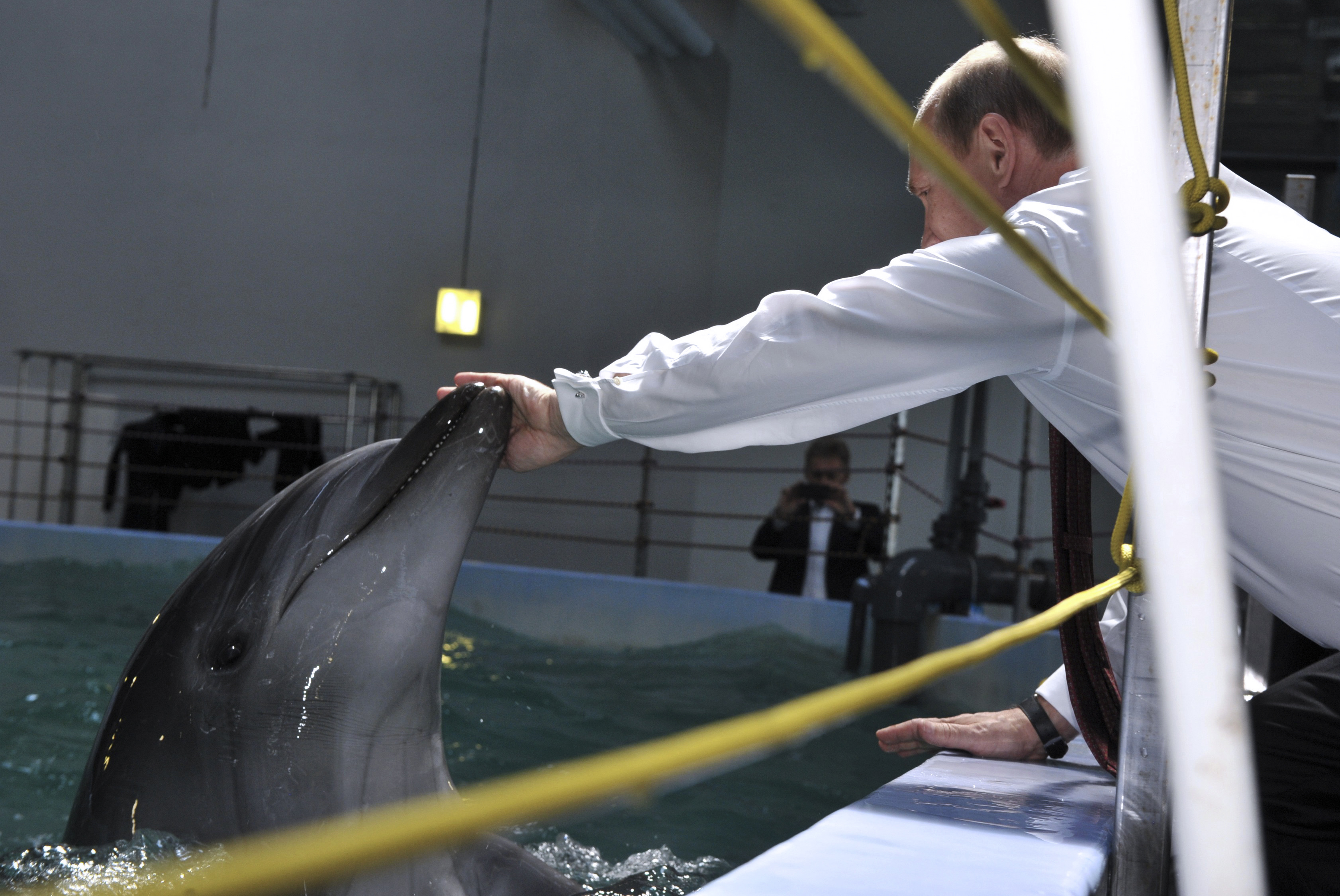 Russia's President Putin leans to touch a dolphin as he visits the Primorsky Aquarium, which is under construction, on the Russky Island in Vladivostok