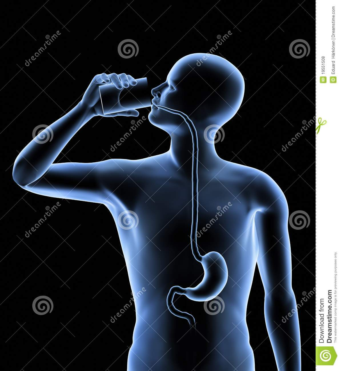 http://www.dreamstime.com/royalty-free-stock-photos-human-body-stomach-image19551508