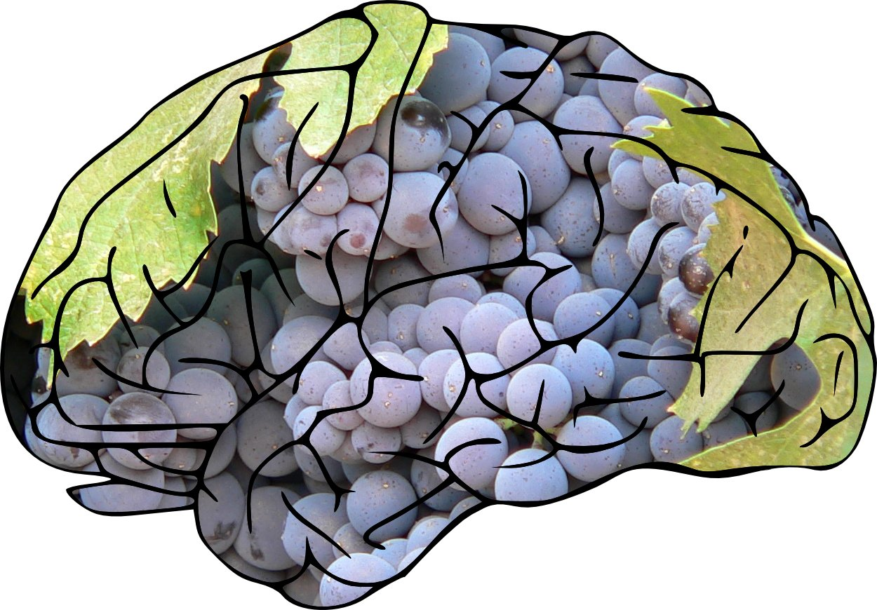 Brain-grapes