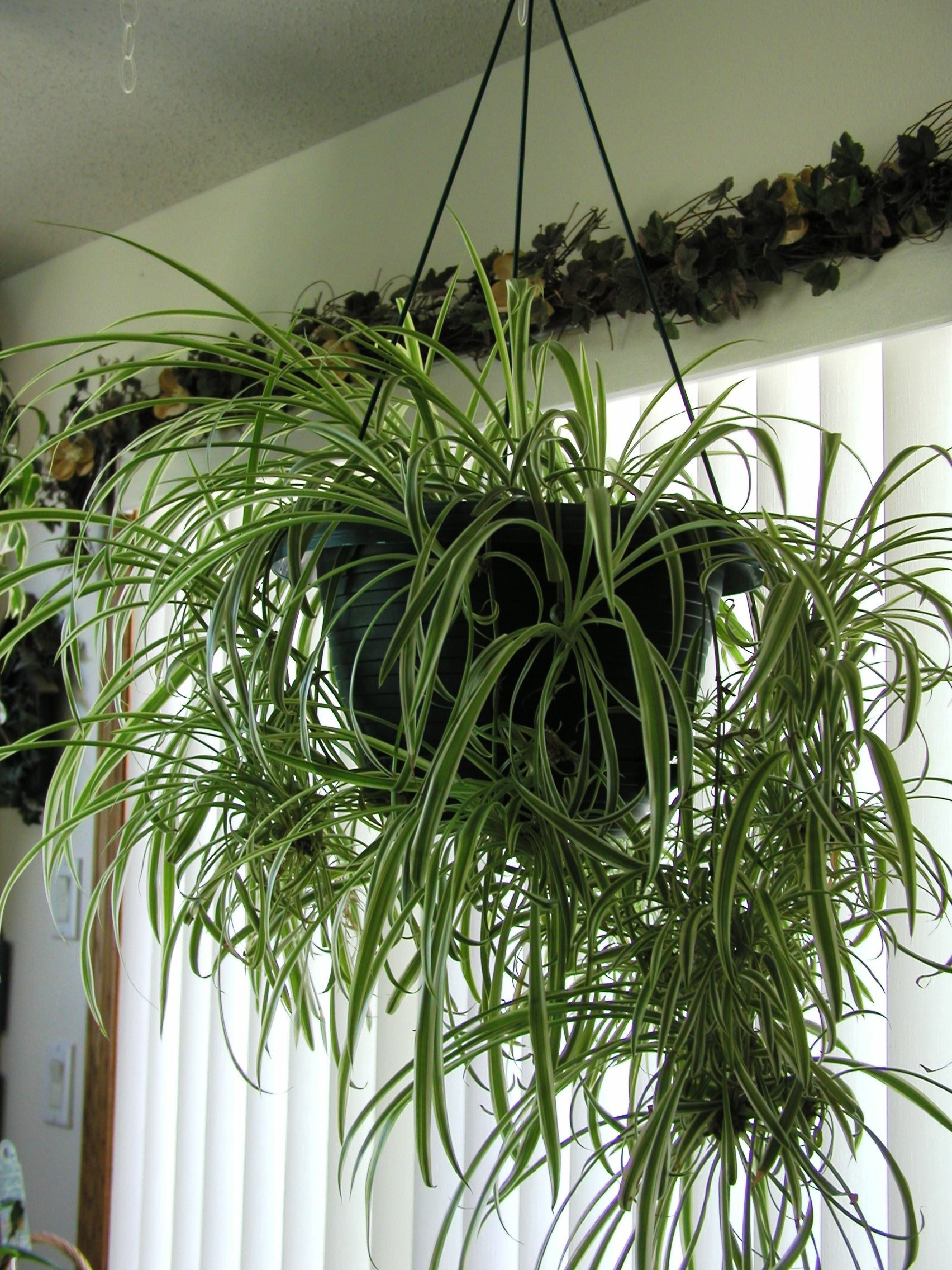 Air cleansing plants also boost relative humidity and decreases  #4A6027
