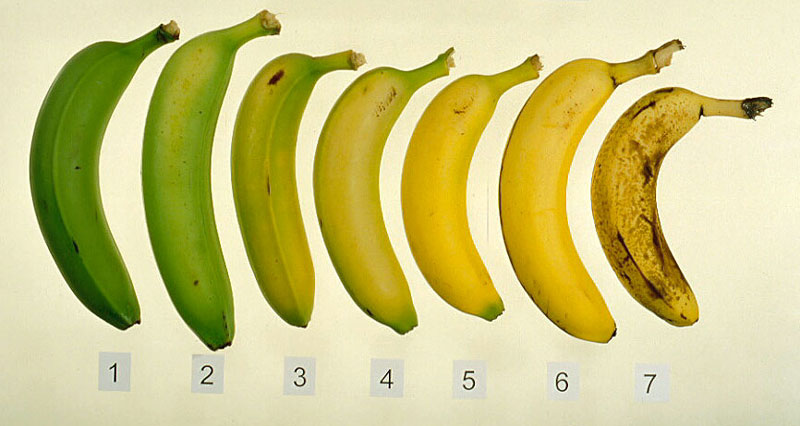 Banana Stages