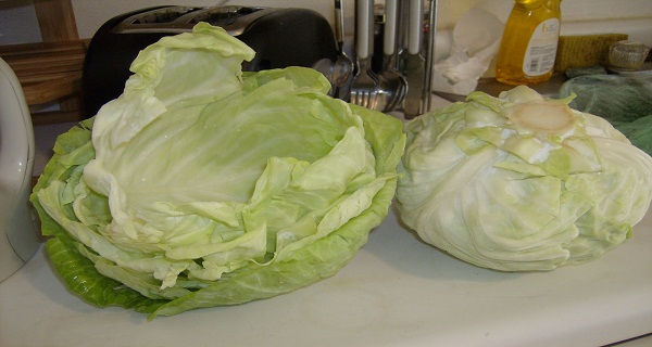 What-Can-Cabbage-Leaves-Cure