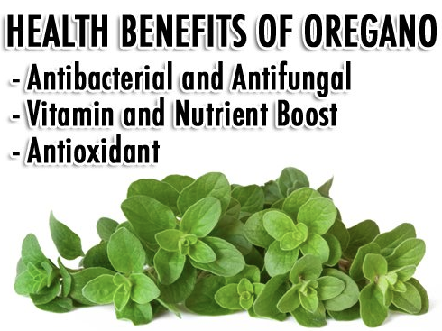 Oil of Oregano: A Powerhouse for the Alternative Medicine Cabinet Health-benefits-of-oregano-oil