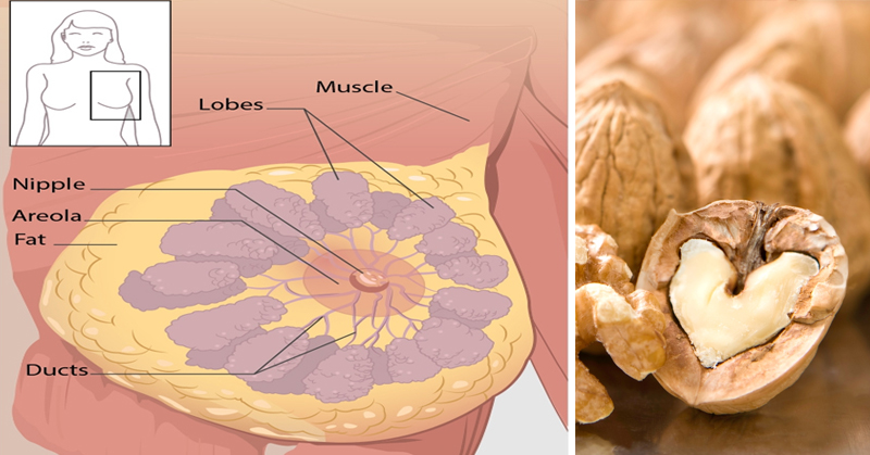 How Walnuts Fight Cancer!
