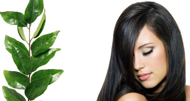 How to Stop Hair Loss Fast with Curry Leaves!
