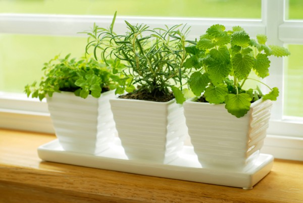 How to Grow Herbs in Your Own Home