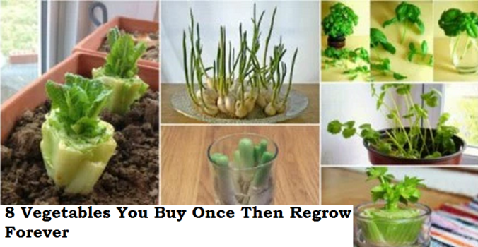 Vegetables-You-Buy-Once-And-Regrow-Forever