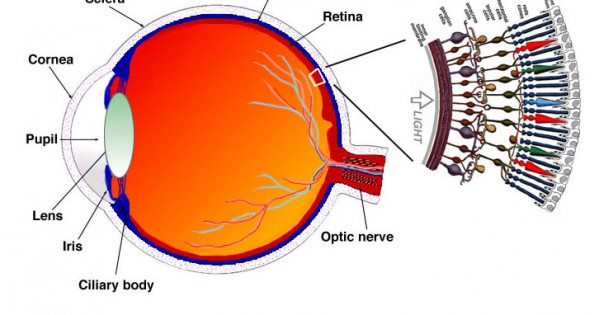 How To Improve Your Eyesight Naturally!