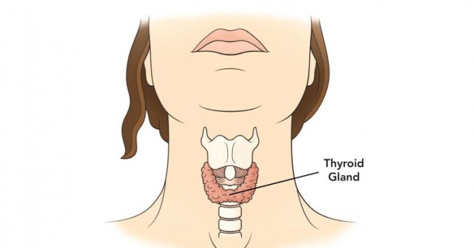 Thyroid Healing Plan Reverses Inflammation!