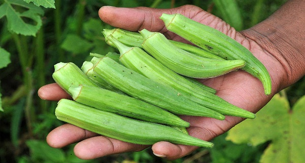 20-Amazing-Health-Benefits-of-Okra