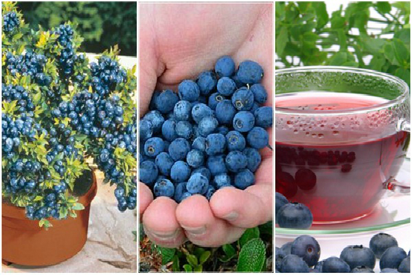 Only 1 Cup Of This Fruit Every Day Will Lower Your Blood Pressure (How To Grow An Endless Supply Of Blueberries)