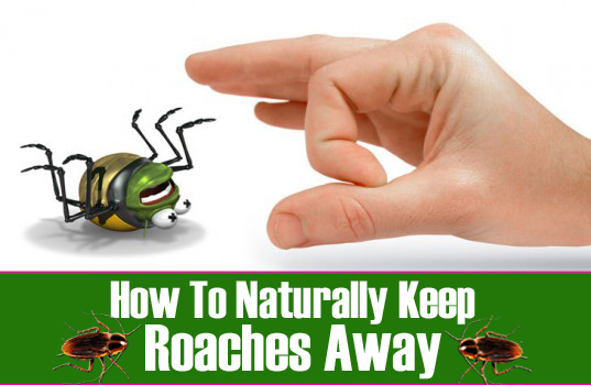 Naturally Keep Roaches Away