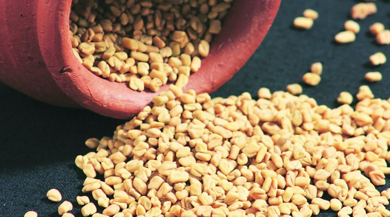 fenugreek, fenugreek seeds, fenugreek powder, fenugreek leaves, fenugreek medicinal uses, methi, spices, condiments, therapeutic benefits, medicinal properties, Greek literature, Latin literature, Ayurvedic literature