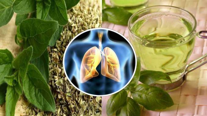 Image result for HEAL YOUR LUNGS WITH THIS TEA: COUGH, ASTHMA-BRONCHITIS-EMPHYSEMA- RHEUMATISM-INFECTIONS…